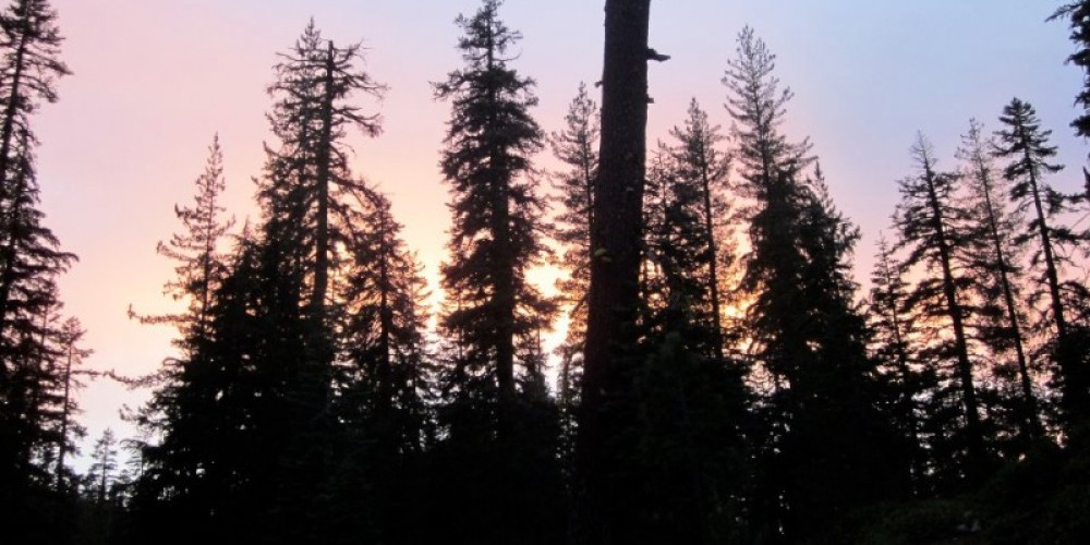 Sunset frames mountain hemlocks and red firs near the waterfall. – Leah Duran