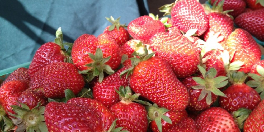 Fresh strawberries at the Chico Certified Farmers' Market. – www.chicofarmersmarket.com