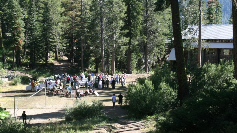 Summer activity in the meadow – Joel Brody