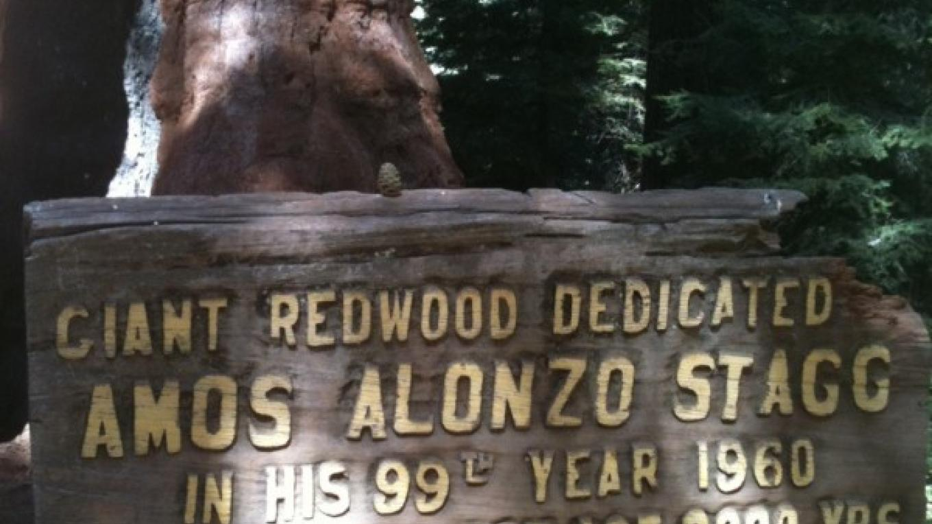 Stagg Tree 2 – Kim Batty