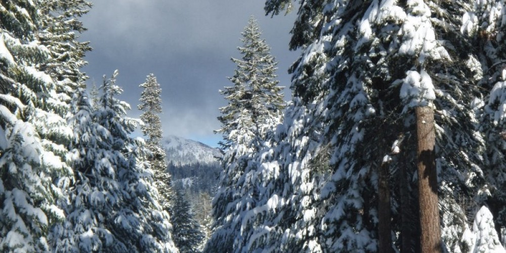 Snow on trees at the Tamarack Sno-Park – midsierramusing.blogspot.com