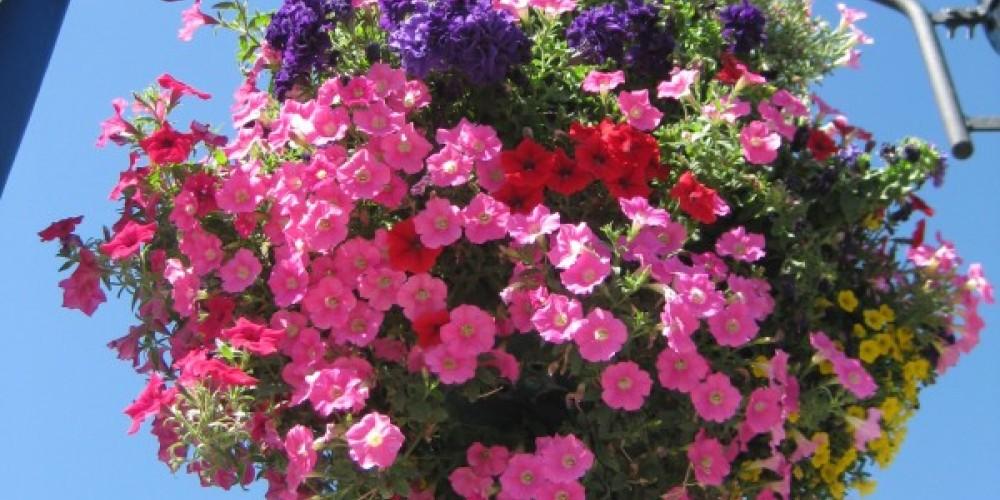 Flowers on Main Street – Paula Lochridge