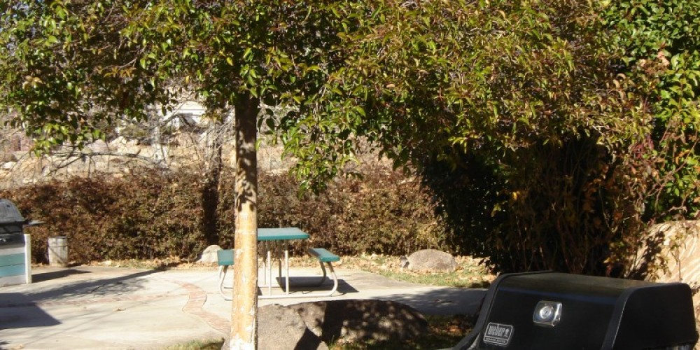Private Patios and walkways – Carla Thorn