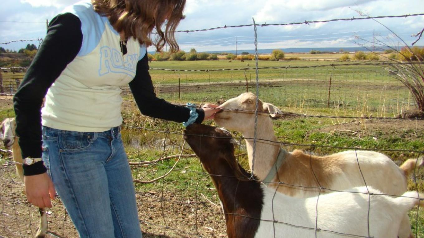 If Betsy's there she'll let you feed the goats. – Jean Bilodeaux