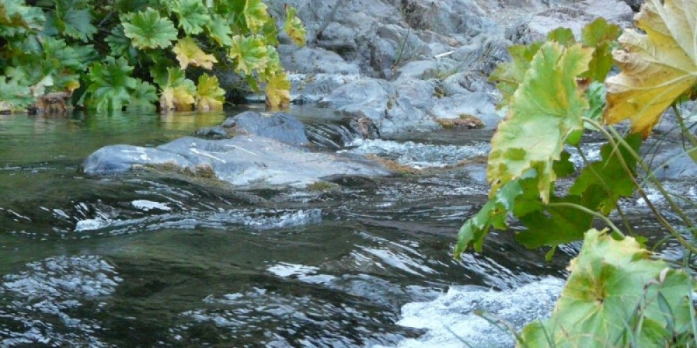 Upper part of the Downie River, just as leaves start to turn. – Jessica Frame