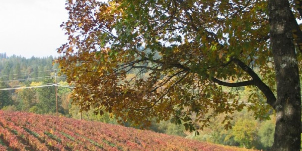 Fall Vineyard at Boeger Winery – Jim Ginney
