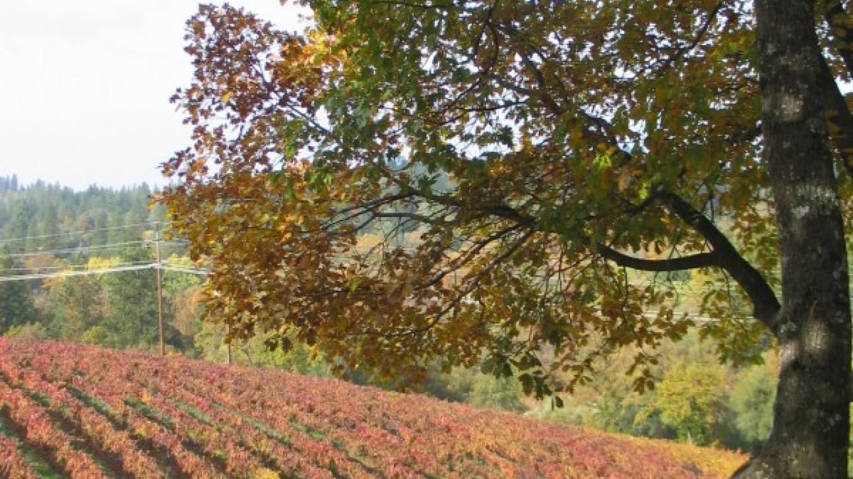 Fall Vineyard at Boeger Winery – Jim Ginney