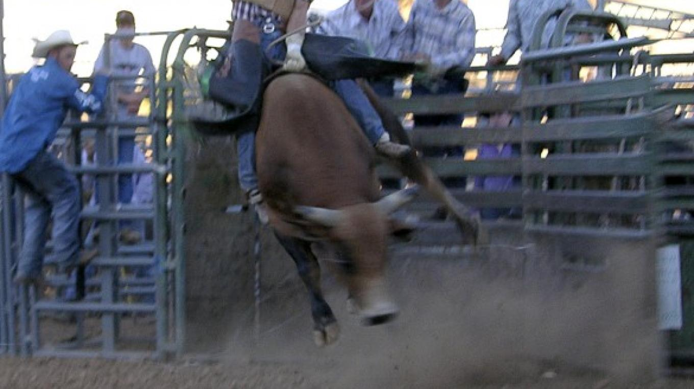 Humpz and Hornz Bull riding – Suzanne Wright