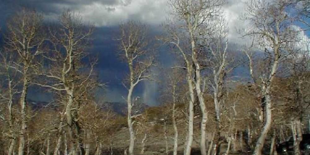 Parker Trail Vista - Thunder Clouds