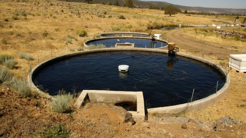 The concrete ponds – Lorissa Soriano