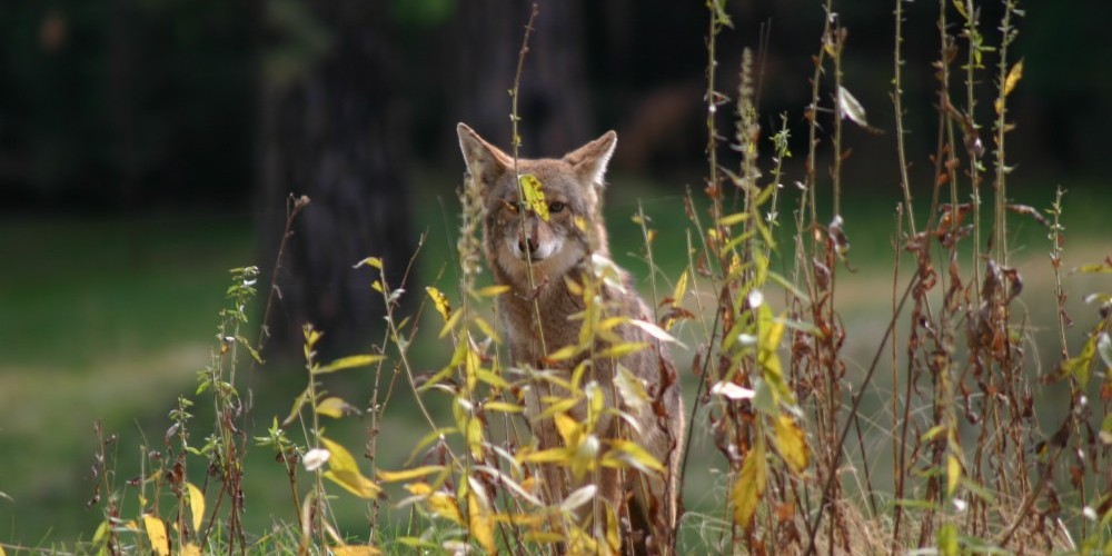 Wawona wildlife – Pat Althizer