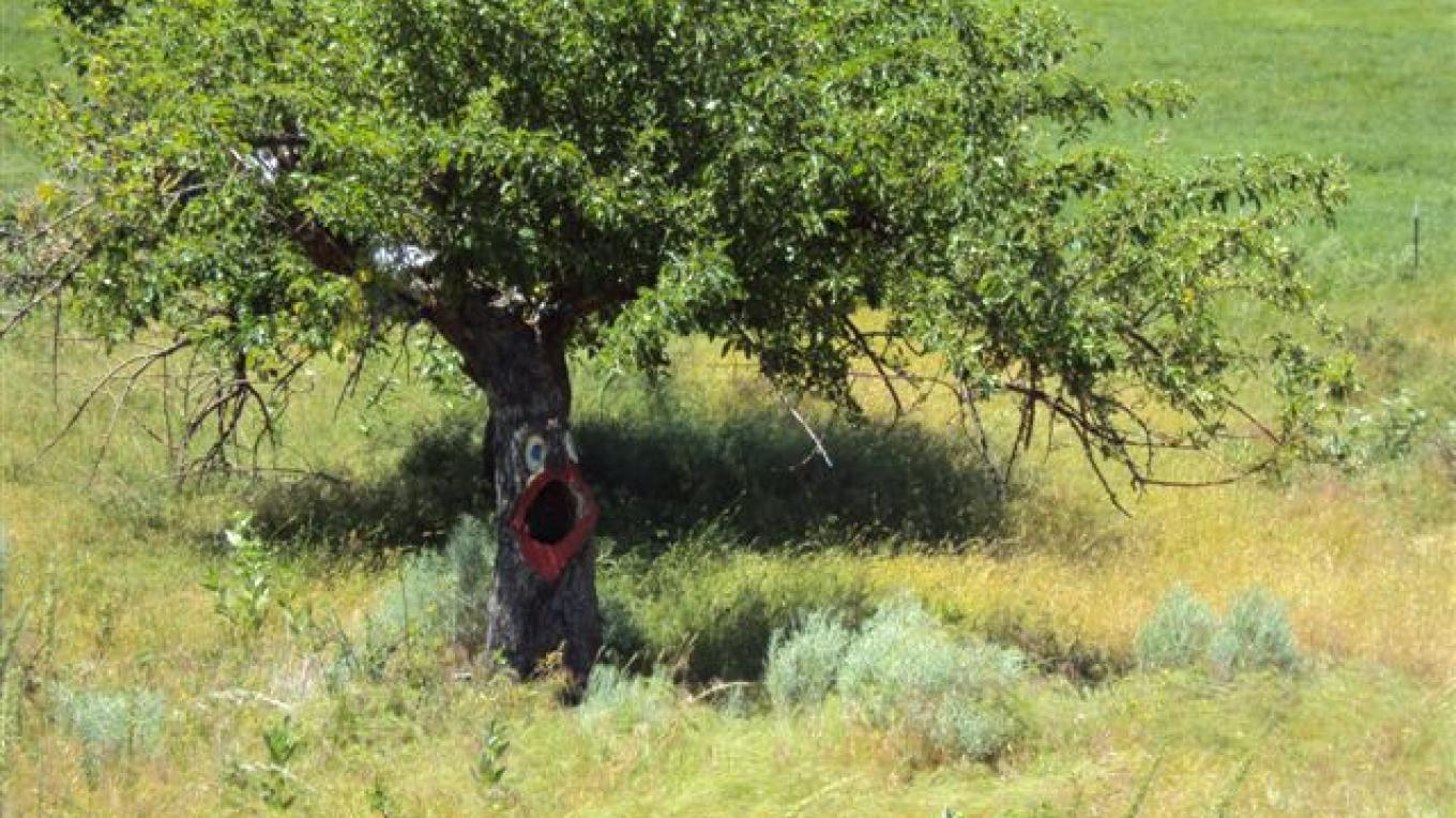 A little whimsy on a 100 year old apple tree. – Betsy Ingraham