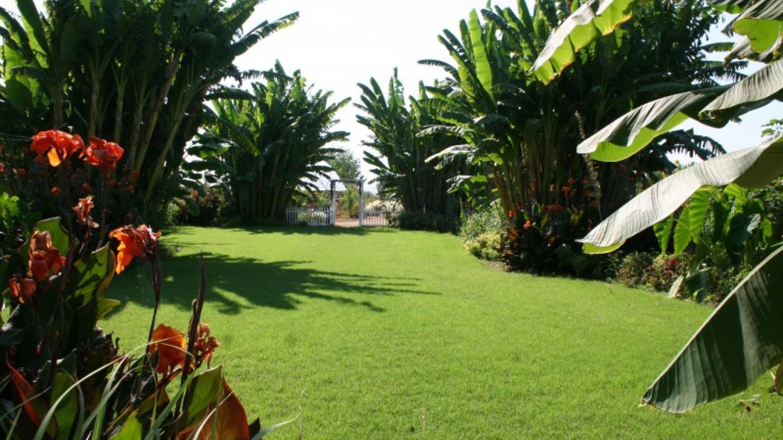 Tropical Garden – M. Jimenez