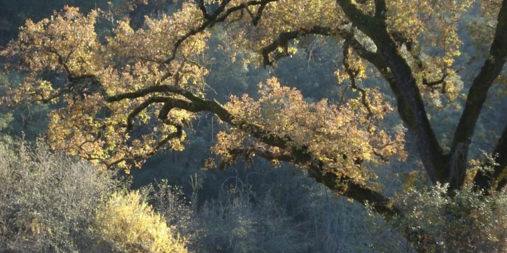Electra run, Mokelumne River, in fall – Katherine Evatt