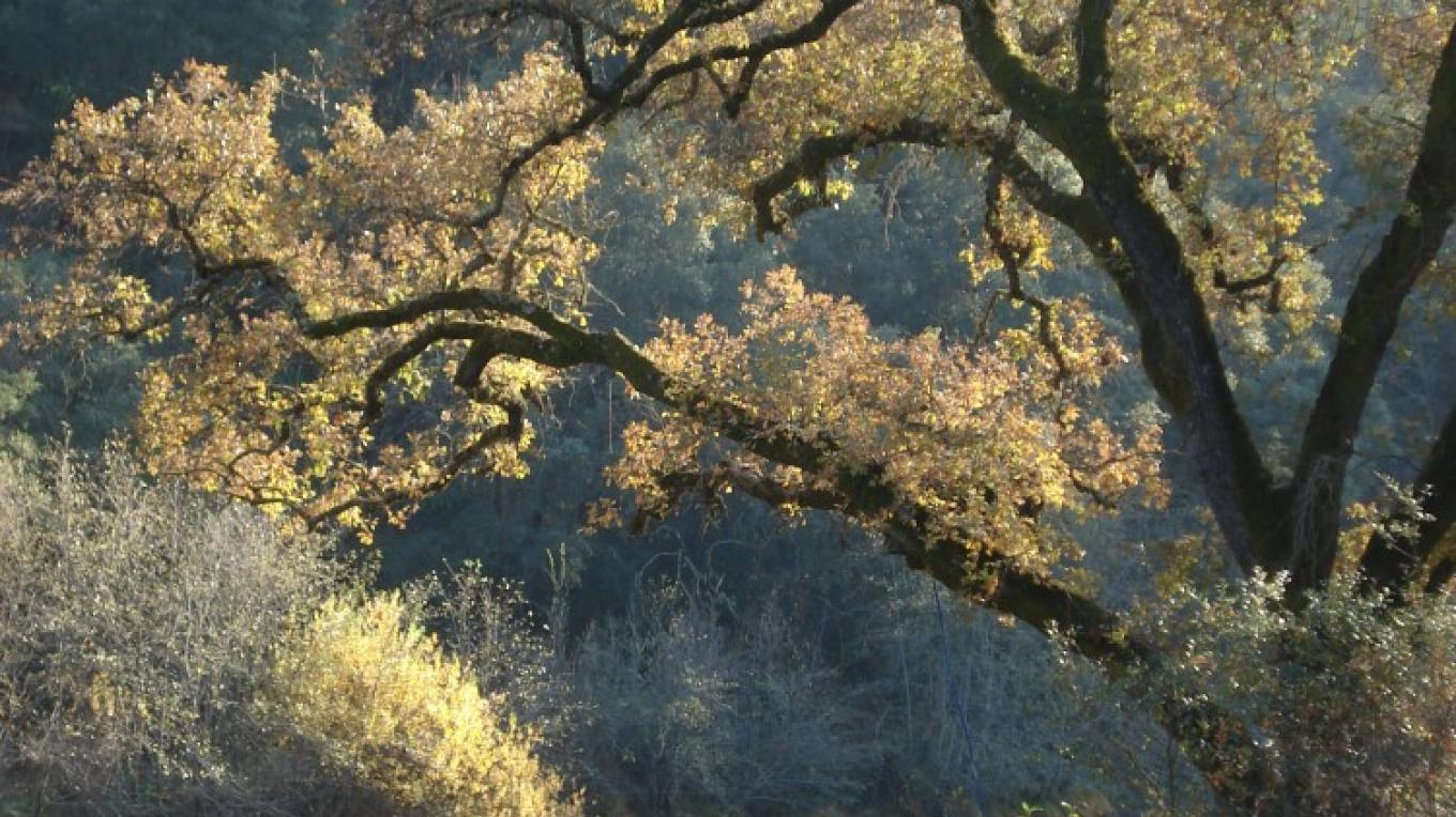 Electra run, Mokelumne River, in fall – Katherine Evatt