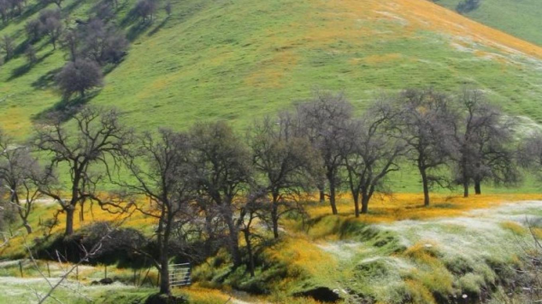 Dry Creek Drive: a spectacular springtime journey – Mahalia LoMele