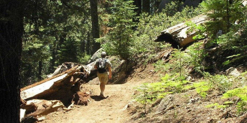 Hiking along trail in the Freeman Creek Grove – U.S. Forest Service