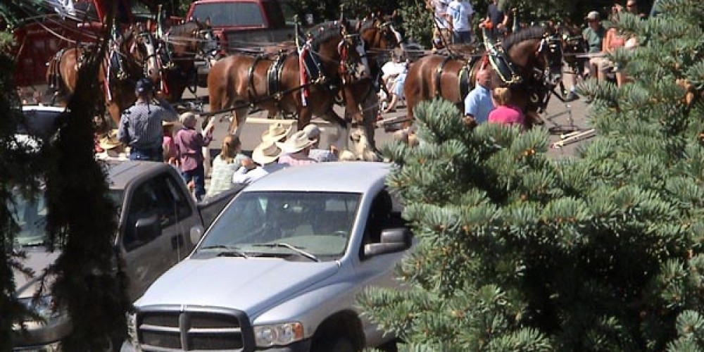 Clydesdale Horses in Modoc County Fair Parade in front of JnR Hotel – Jim Brown