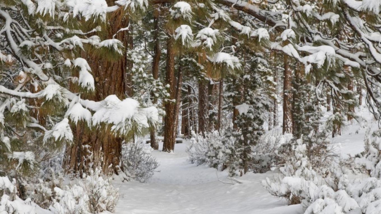 Beautiful in Winter – Joel Rathje