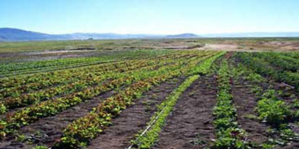 Fields at Sierra Valley Farms