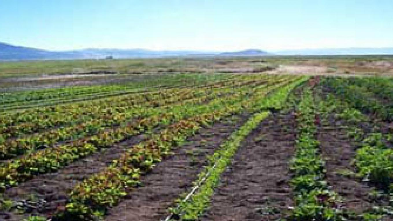 Fields at Sierra Valley Farms