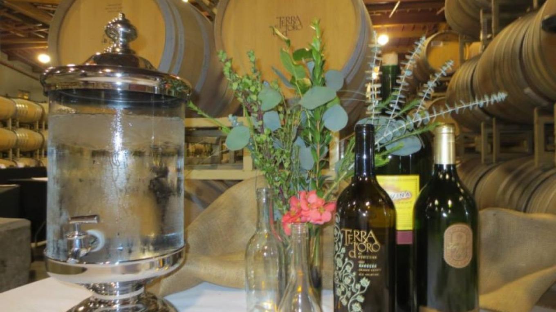 Terra d'Oro Winery events. – Terra d'Oro Winery