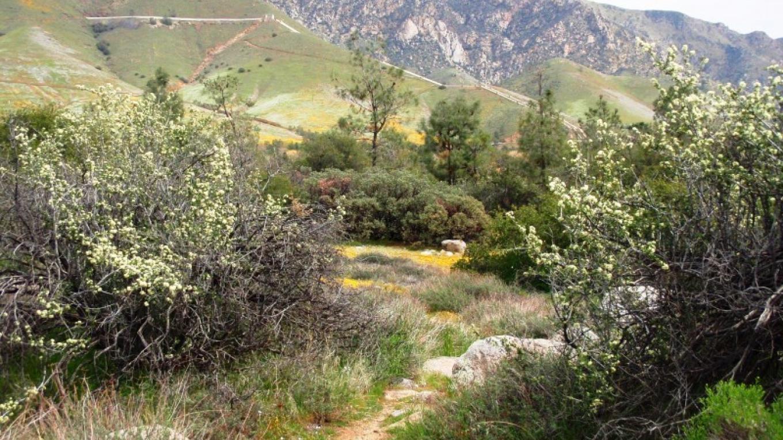 Whiskey Flat Trail – Cynthia Allred