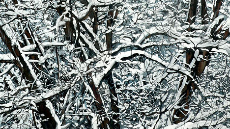 Snow in Sequoia. – Nadi Spencer