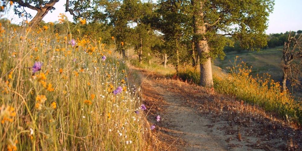Shoreline trail 3 – Dave Jigour