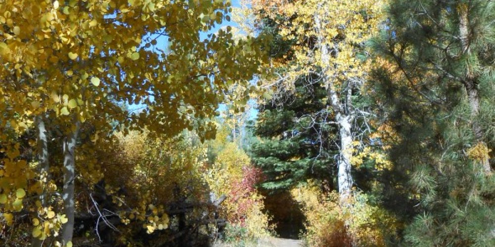 Fay-Luther/Jobs Peak Ranch Trail – Carson Valley Trails Association