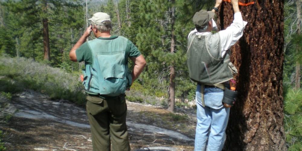 Flagging trail alignment in old growth area near Ansel Adams Wilderness – Steve Haze