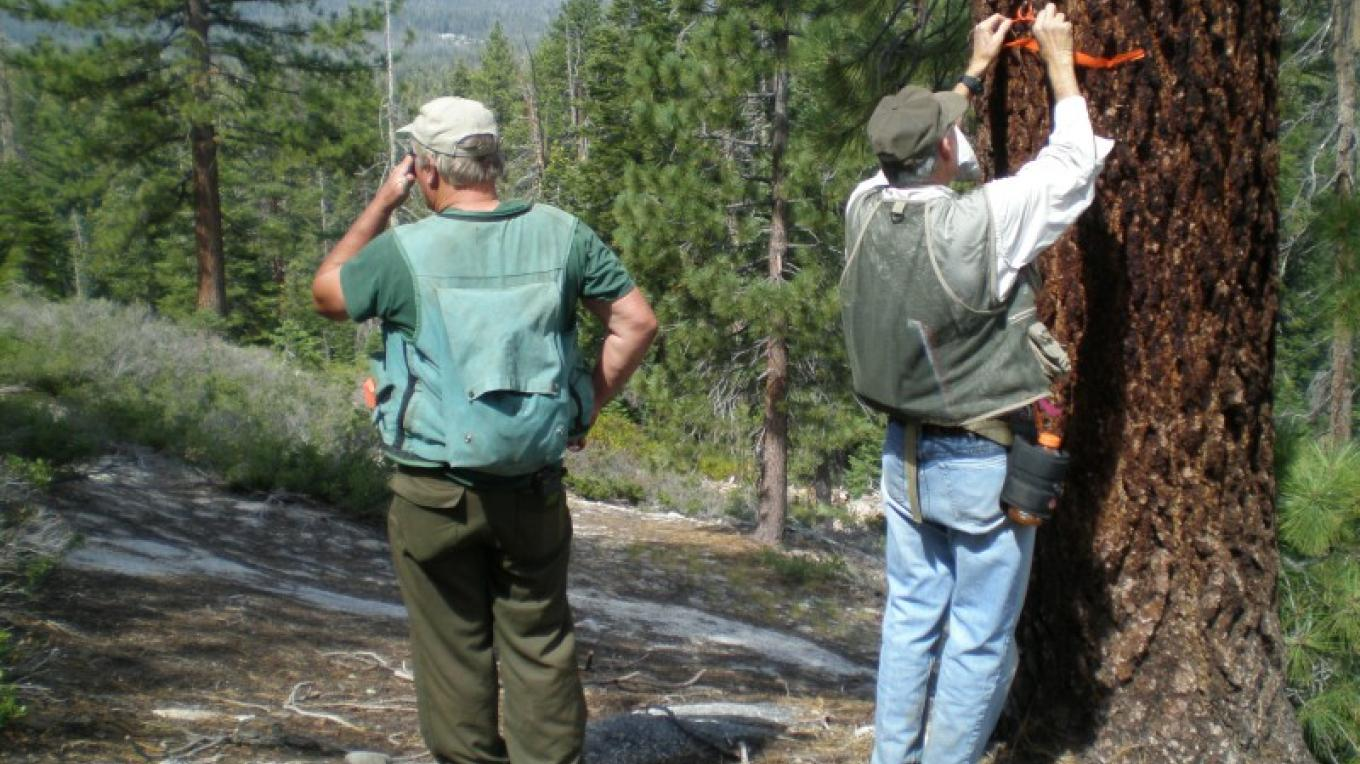 Flagging trail alignment in old growth area near Ansel Adams Wilderness – Steve Haze