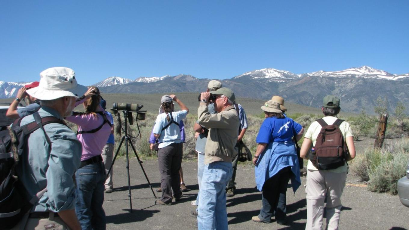 Birding on the East Side, Mono Basin Bird Chautauqua. – Elin Ljung