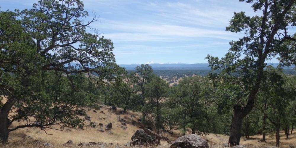 Shasta Land Trust conserves blue oak woodlands and wildlife habitat. – Anne Murphy