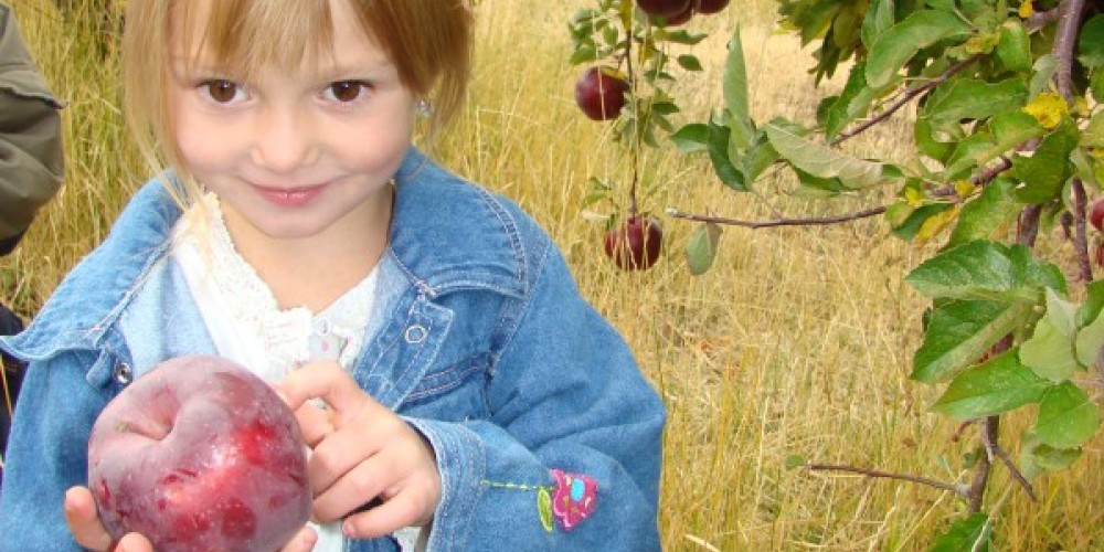 Sometimes Betsy will let you pick your own special heirloom apple. – Jean Bilodeaux