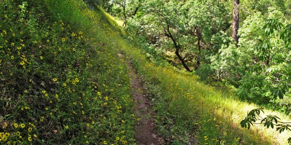 Spring brings a profusion of wildflowers on the Paradise Creek Trail. – NPS/Rick Cain