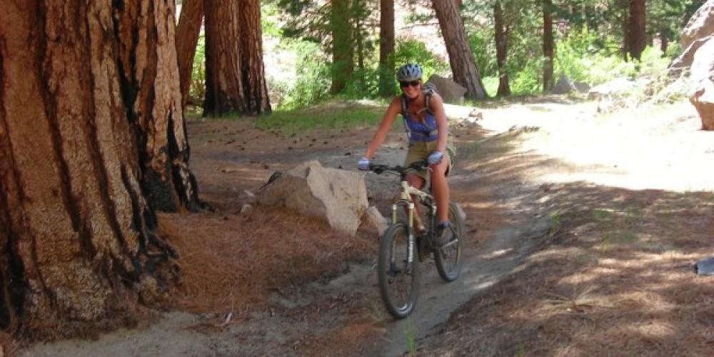 Shady Trees on Lower Rock Creek Mountain Bike Trail – Sarah McCahill