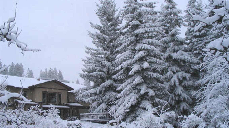 Wintery Snow