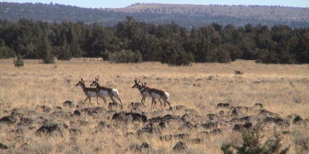 Antilope on a backroad – Jim Brown
