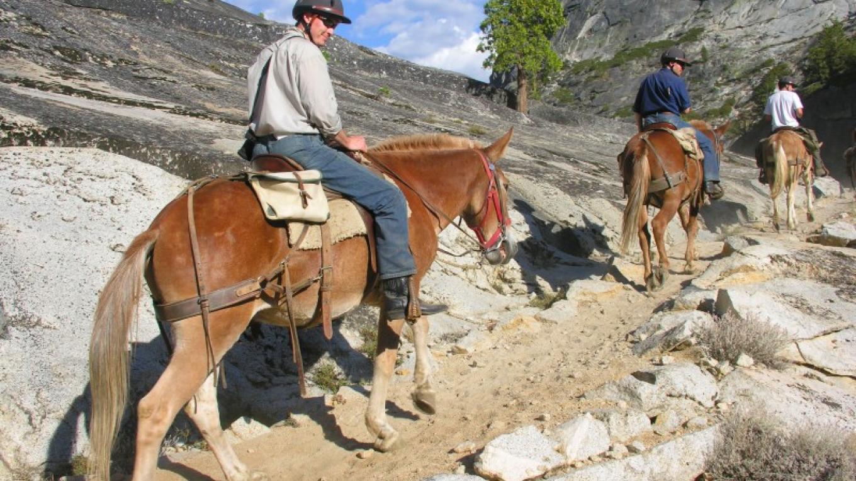 Saddle Trip in Yosemite