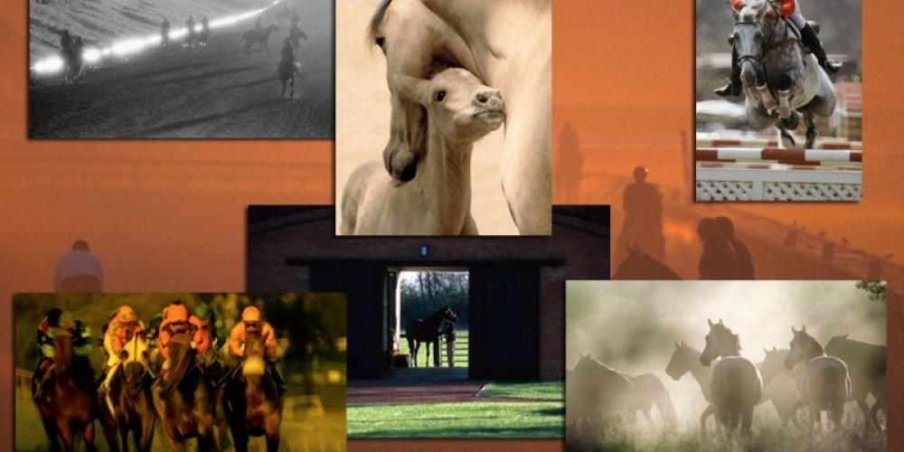 The Wild Horse Sanctuary – Katey Barrett