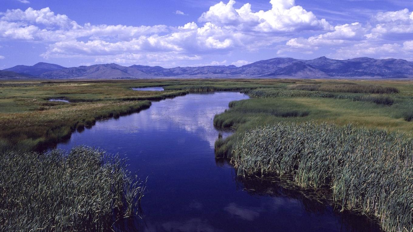 The Sierra Valley Wetlands form the headwaters of the Middle Fork Feather River and support a great diversity and concentration of waterfowl. – Sierra Business Council
