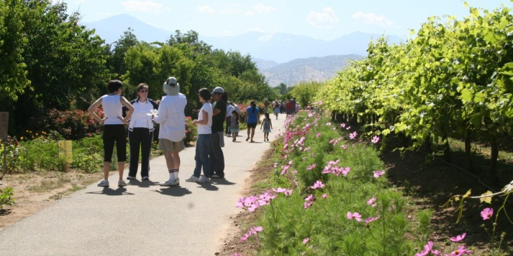 Visitors enjoying a weekend near grape vineyard. – M. Jimenez