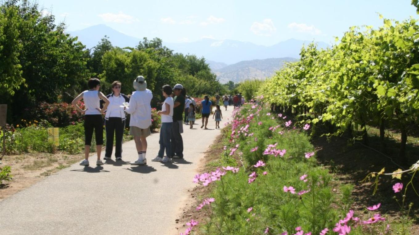 Visitors enjoying a weekend near grape vineyard. – M. Jimenez