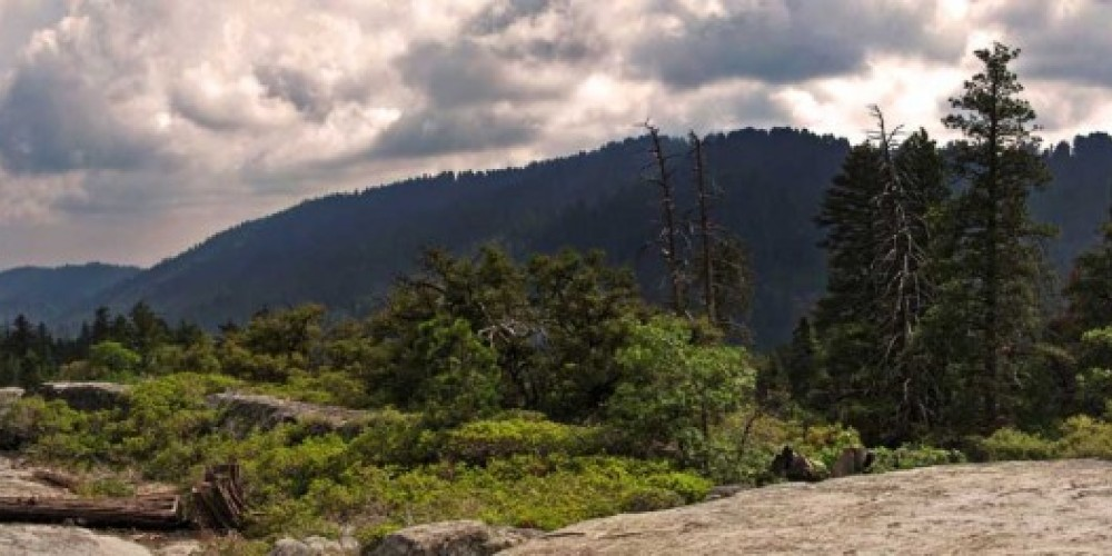 View of Redwood Canyon from an overlook on the Hart Tree Trail. – NPS/Rick Cain
