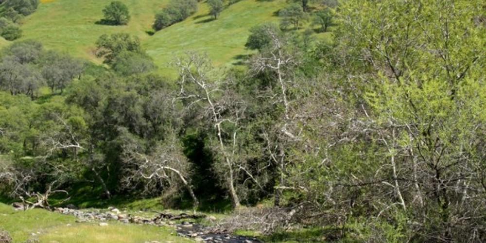 Poppies light up the hillsides in spring – John Greening