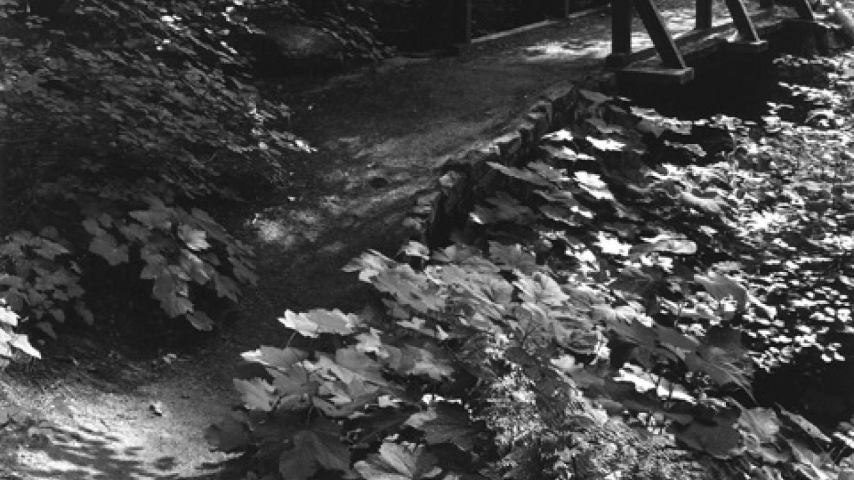 Trail, Tuolumne Grove – Ben Dewell
