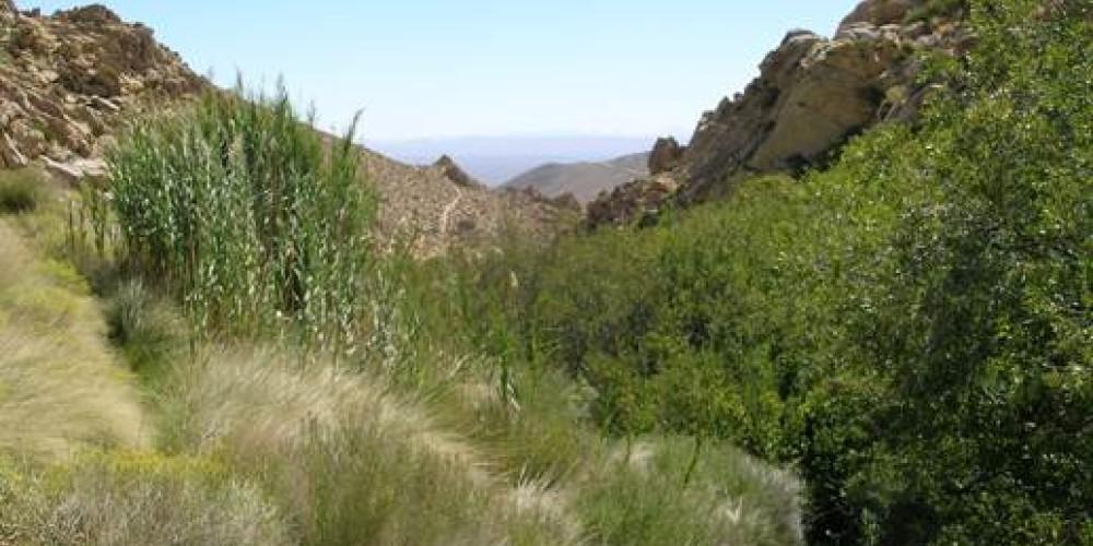 Lower Short Canyon riparian area – shelley ellis