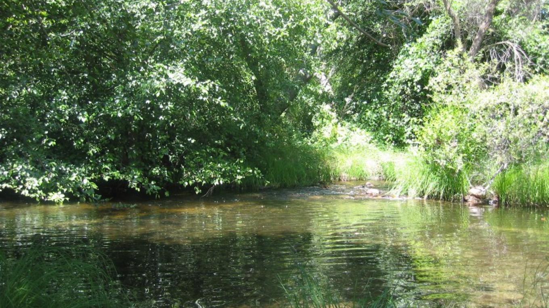 North Fork swimming hole below shop – Janene Lasswell