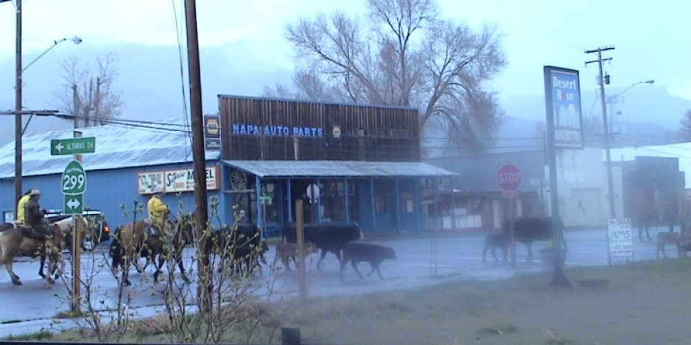 Cattle Drive in front of the hotel on Main St. – Jim Brown